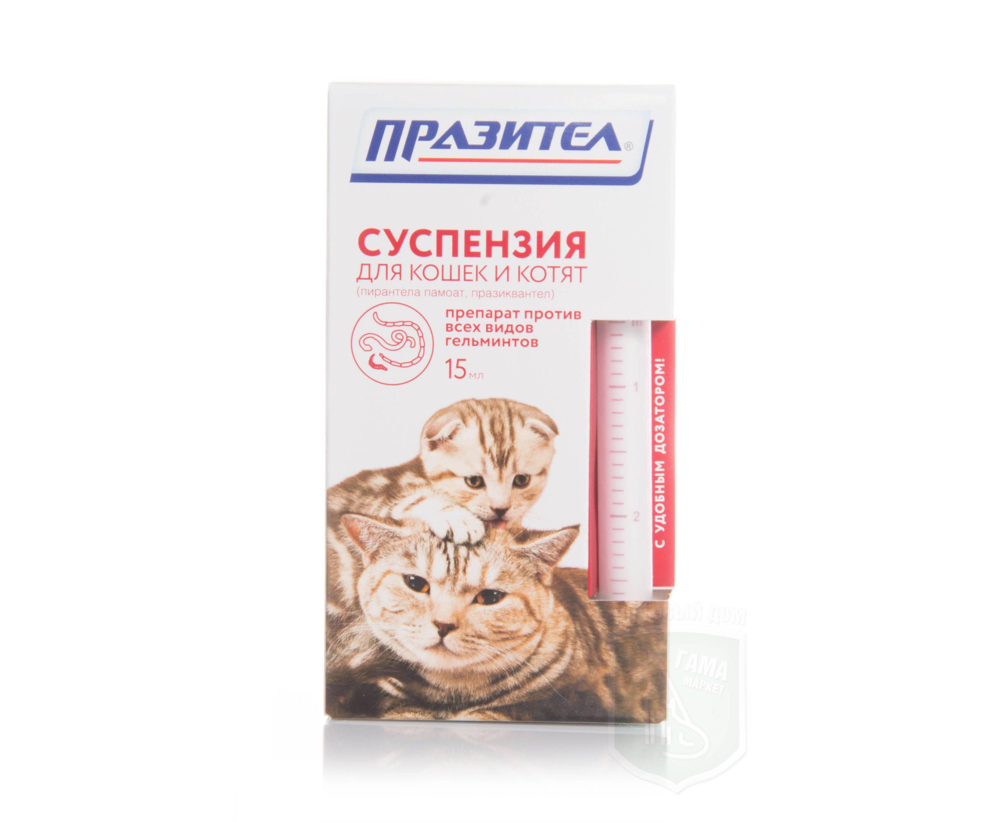 Празител для кошек: помощник в борьбе с паразитами