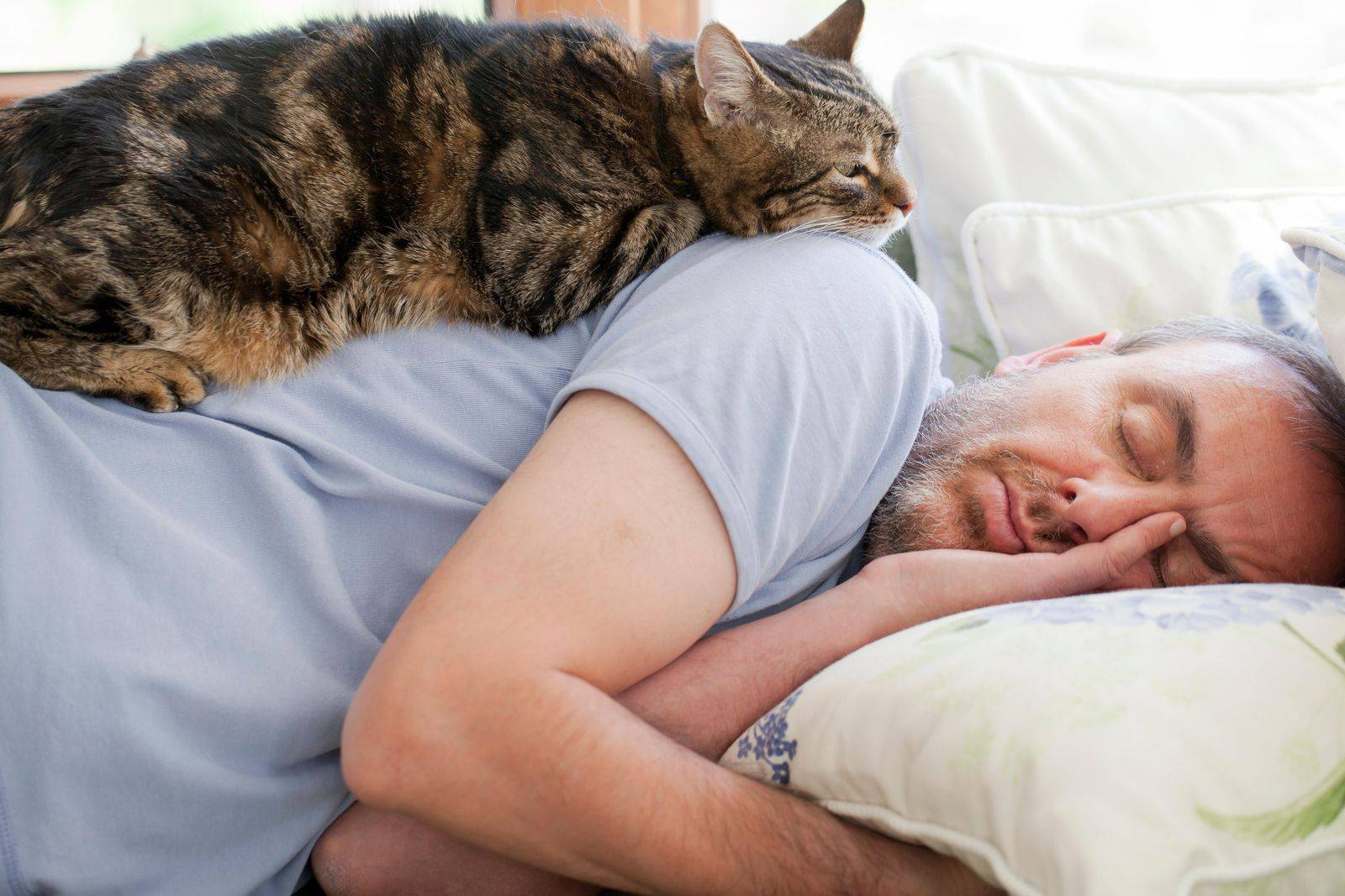 Что необходимо знать, чтобы отучить будить кошку по утрам? новости партнеров - новости партнеров 166. metro