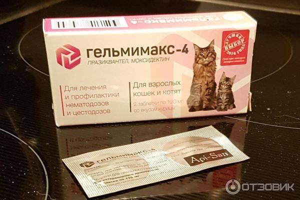 Обзор препаратов для кошек от глистов