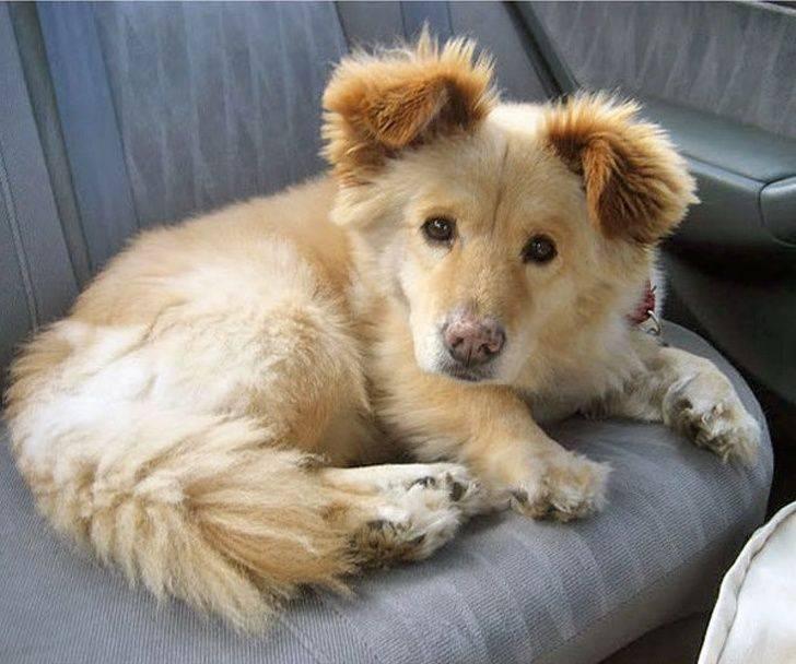 Собаки-метисы (смешанные породы собак): обзор, описание и фото