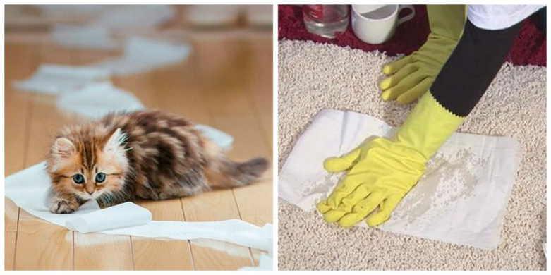 Как отстирать кошачью мочу с одежды и мебели: 20 лучших средств для удаления запаха