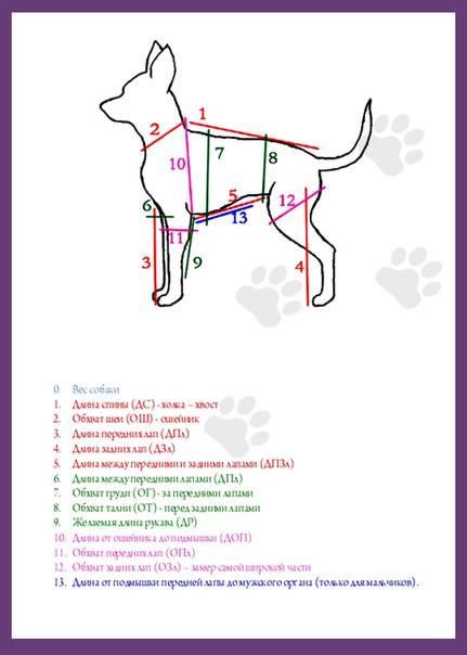 Как определить размер одежды для собаки