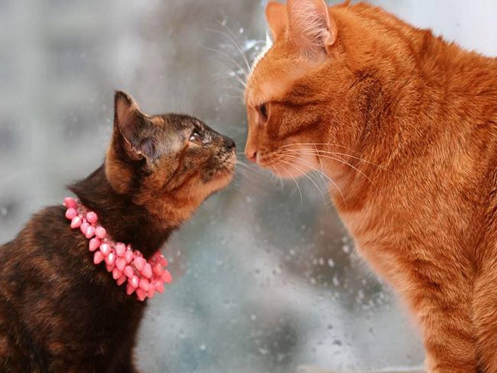 Плохой запах изо рта у кошки: причины, как избавиться