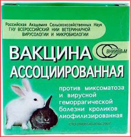 Геморрагическая болезнь кроликов: симптомы и лечение
