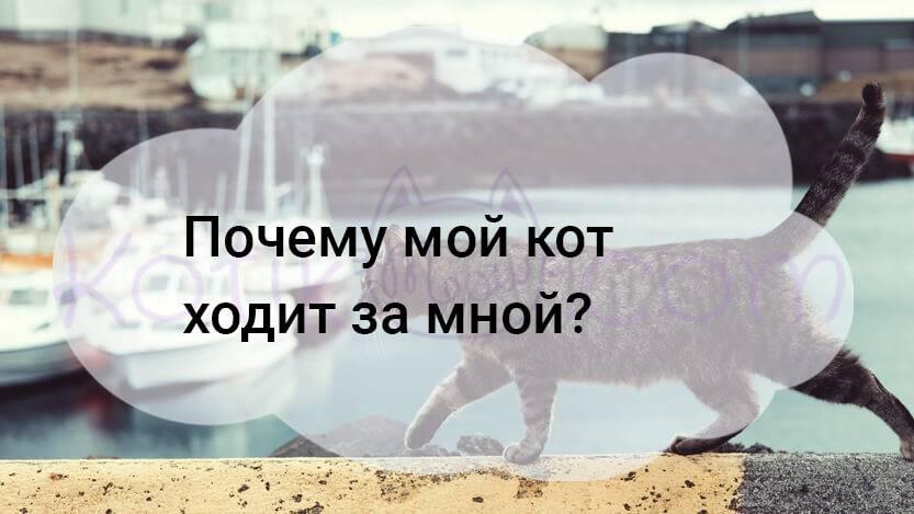 Почему кошка ходит за мной по пятам?