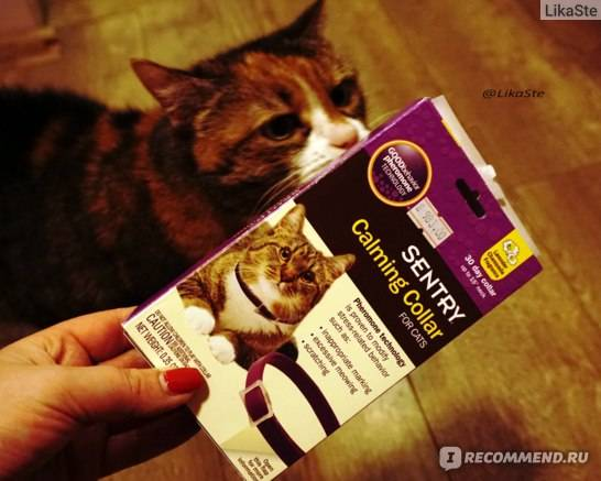 Принцип действия успокоительного антистресс-ошейника для кошки с феромонами