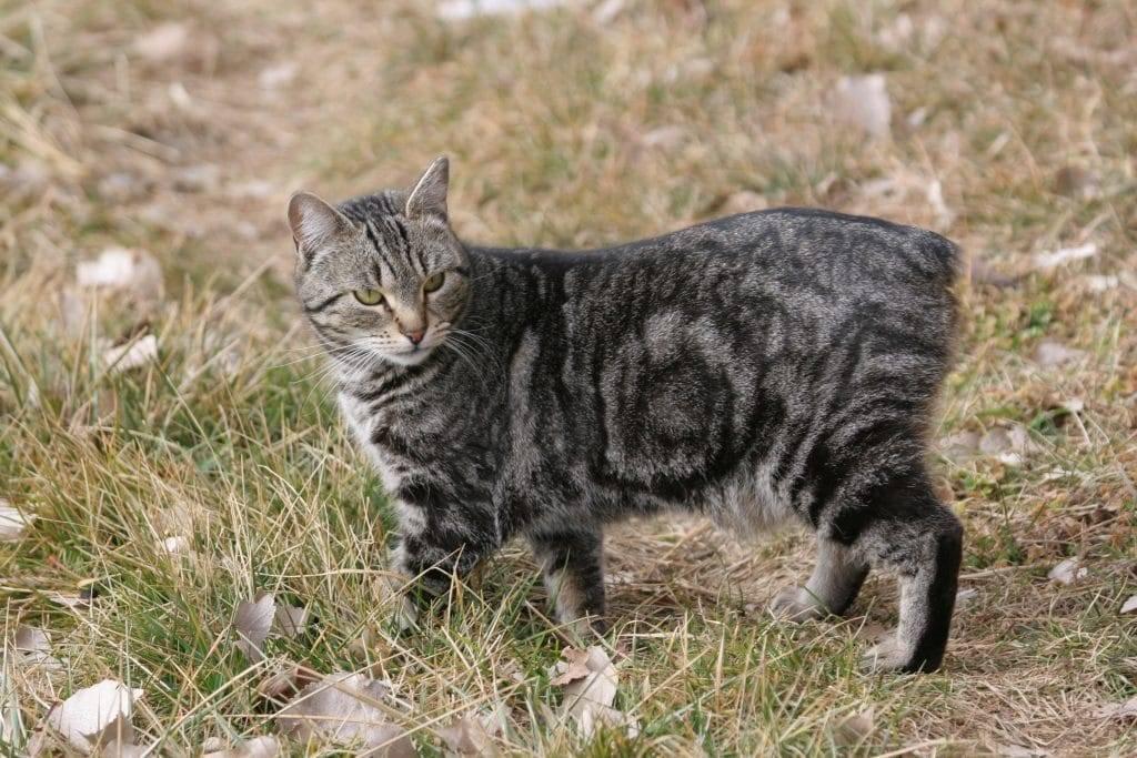 Сфинксы кошки: все виды лысых пород с описанием, фото и цена