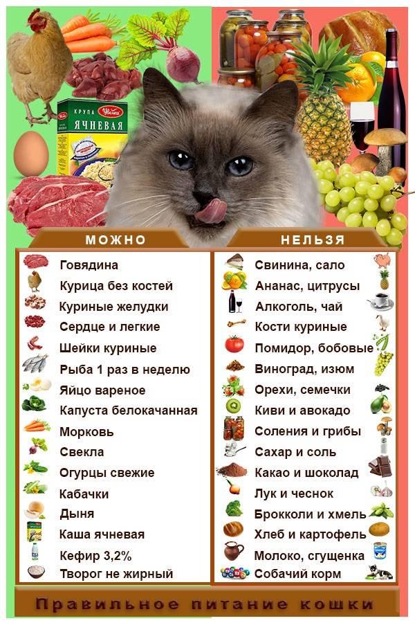 Можно ли собакам есть человеческую еду   фрукты, овощи