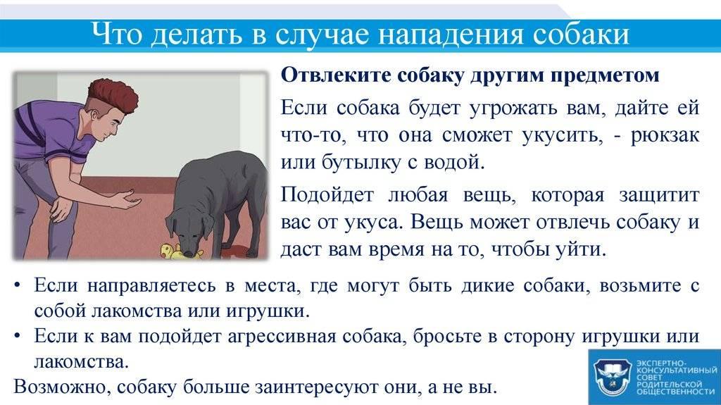 Как вести себя при встрече с бездомными собаками — советы кинологов // нтв.ru