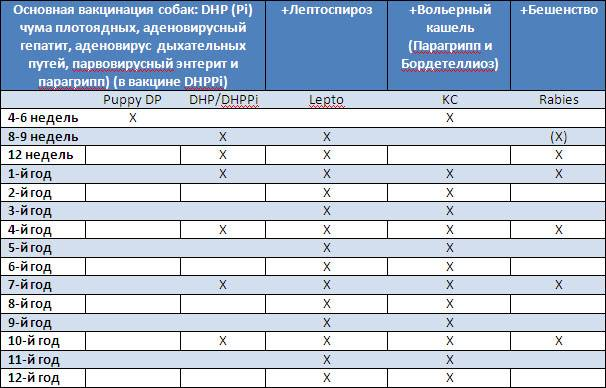 Прививки для собак: таблица, цена, по возрасту, правила