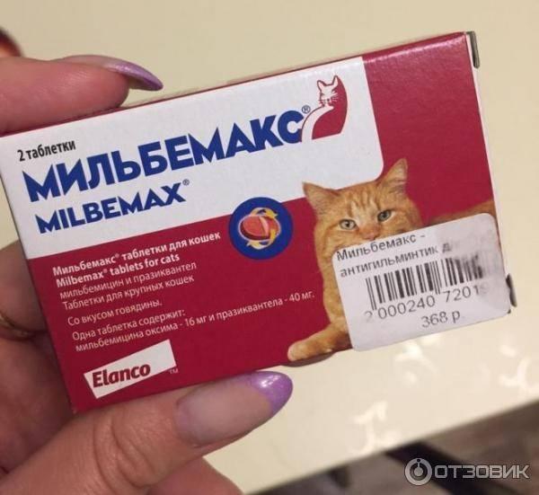 Мильбемакс для котят, кошек и собак: инструкция по применению, отзывы