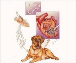 Глисты у собак – причины поражения, симптомы и лечение