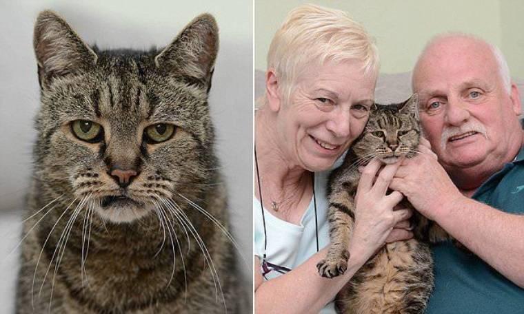 Кошки-долгожители
