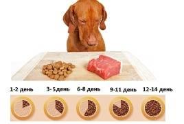 Как перевести собаку на сухой корм и правильно им кормить?