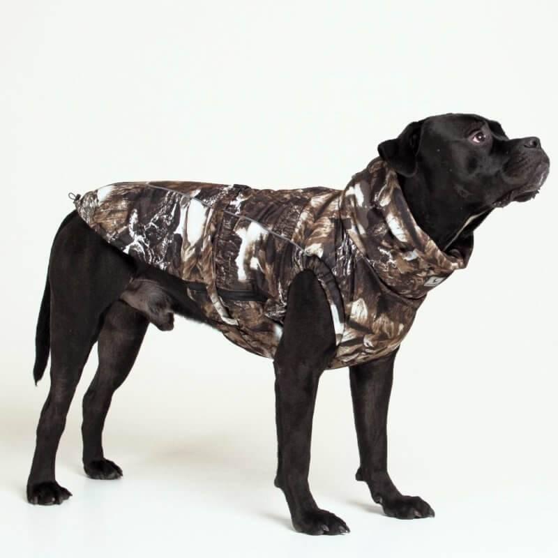 Породы собак средних размеров с фото, названиями и особенностями характера | знать про все