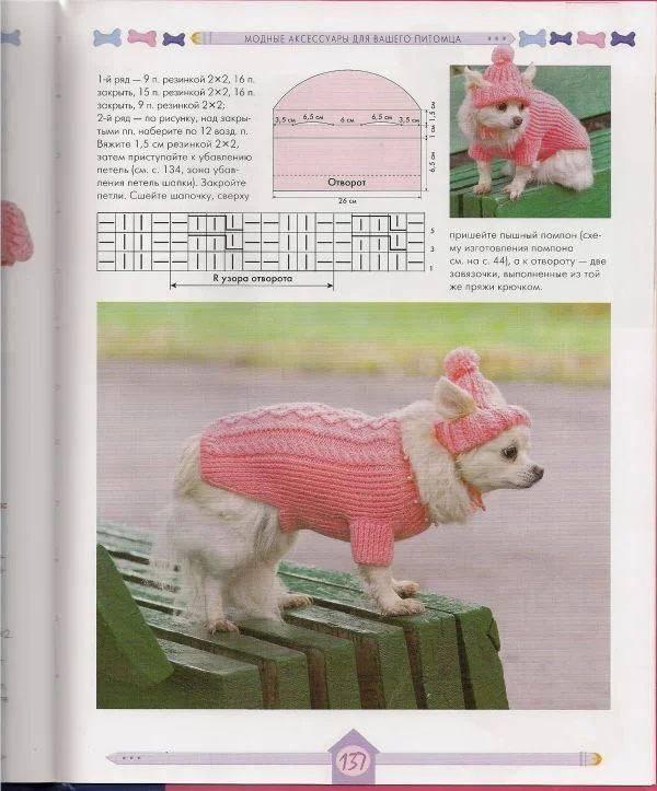 Рекомендации по выбору всей необходимой одежды для собак породы чихуахуа