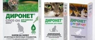 Особенности лекарственного препарата диронет спот-он для кошек