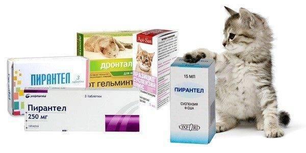 Глистогонные препараты для кошек перед прививкой