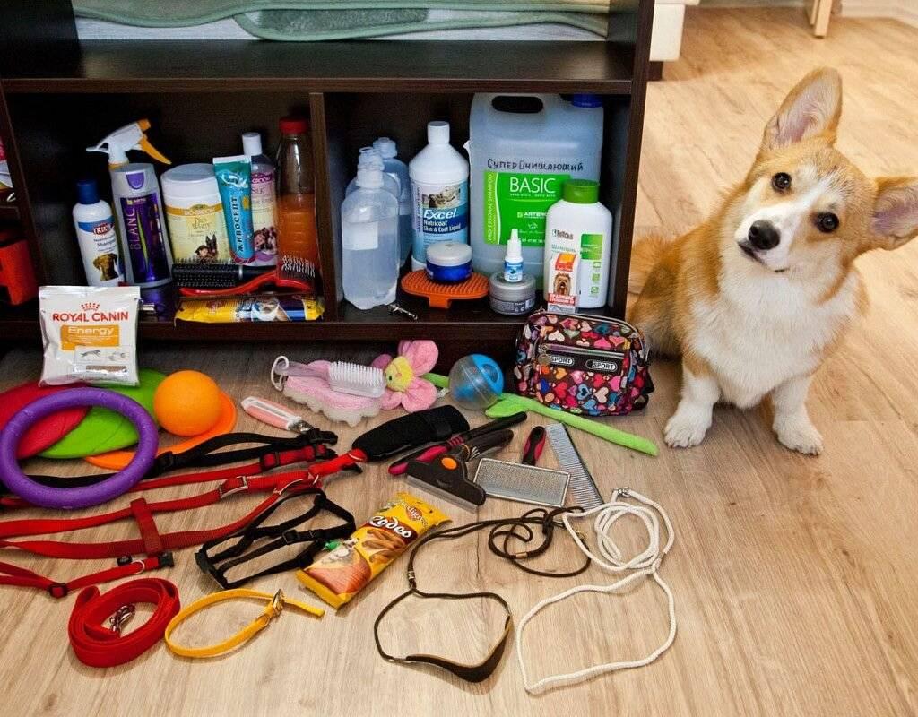 Список всего необходимого для появления собаки или щенка в квартире