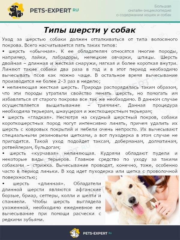 У собаки выпадает шерсть. что делать и как лечить заболевание?
