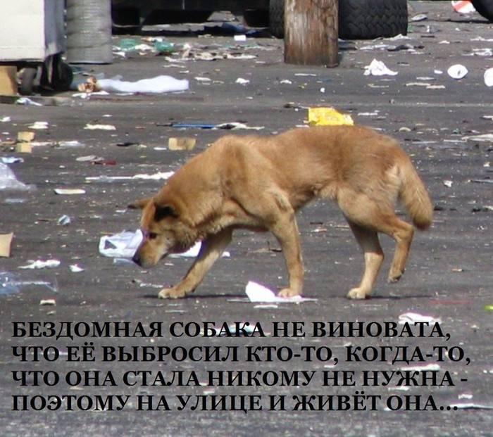 Почему убегает собака и что делать, чтобы этого не произошло?