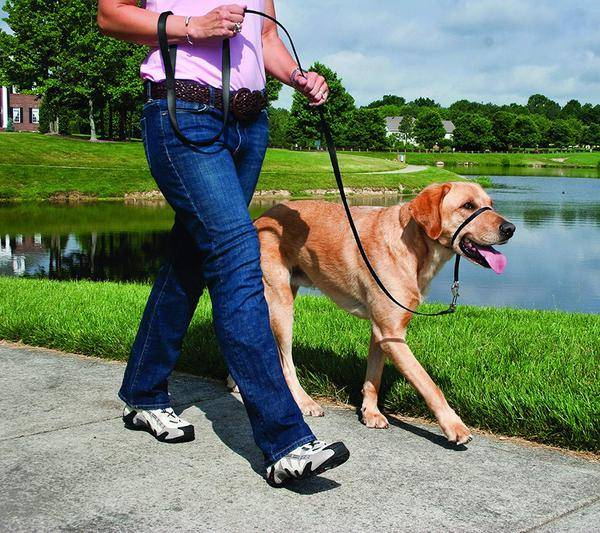 Как приучить собаку к поводку и ошейнику | взрослую и щенка