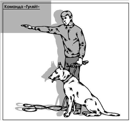 Как научить собаку давать лапу: полезные советы