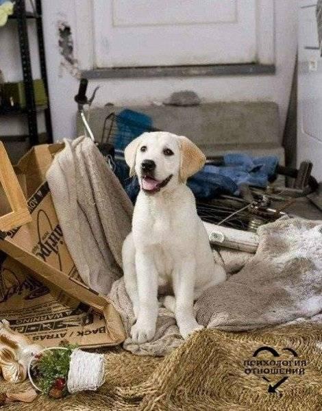 Какую собаку лучше завести в квартире: с детьми и кошкой