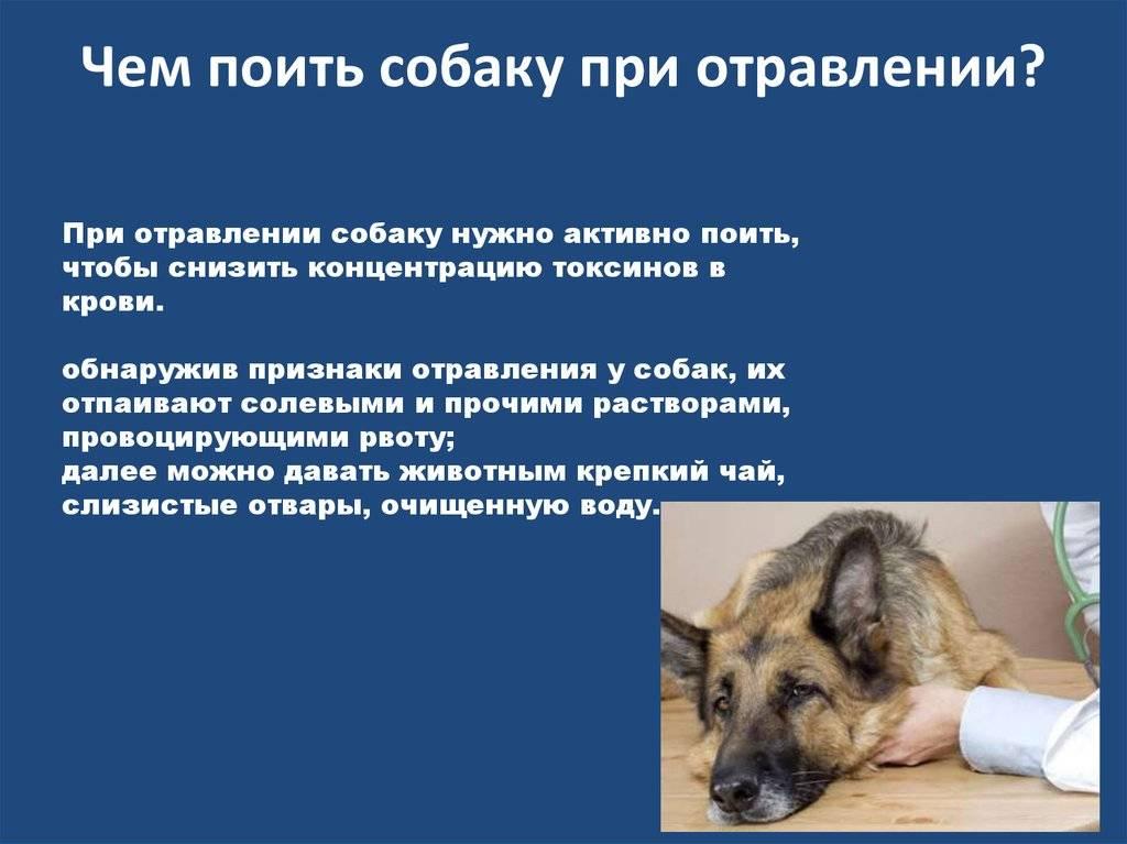 Признаки отравления у собак и первая помощь