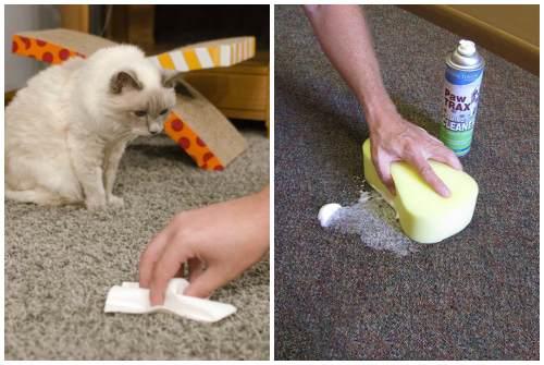 Как избавиться от запаха собачьей мочи: с пола, ковра, линолеума, дивана