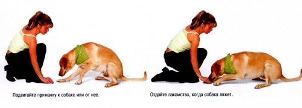 Как научить собаку команде рядом. обучаем собаку ходить рядом на поводке и без него - dogtricks.ru