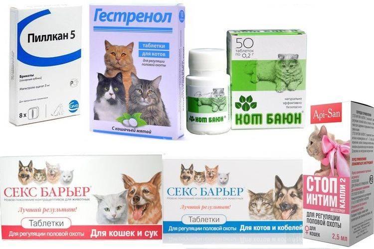 Чем обезболить кошке боль. виды обезболивающих препаратов для кошек