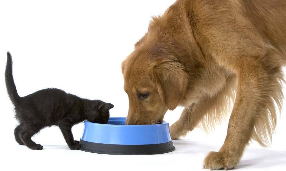 Собака не пьет воду но ест: причины, как заставить щенка попить