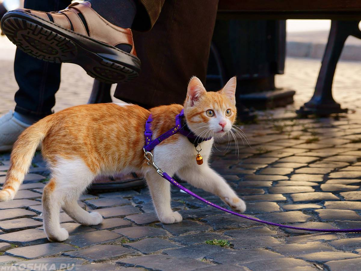 Как пристроить котят в хорошие руки: советы