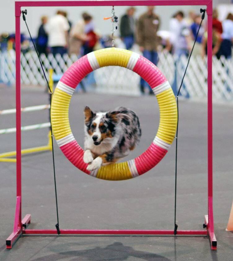 Спорт с собакой: чем заняться с питомцем в свободное время
