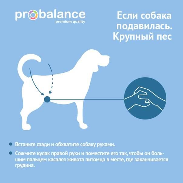 Тревожный кашель у собаки, как будто подавилась — лечение, симптомы и причины