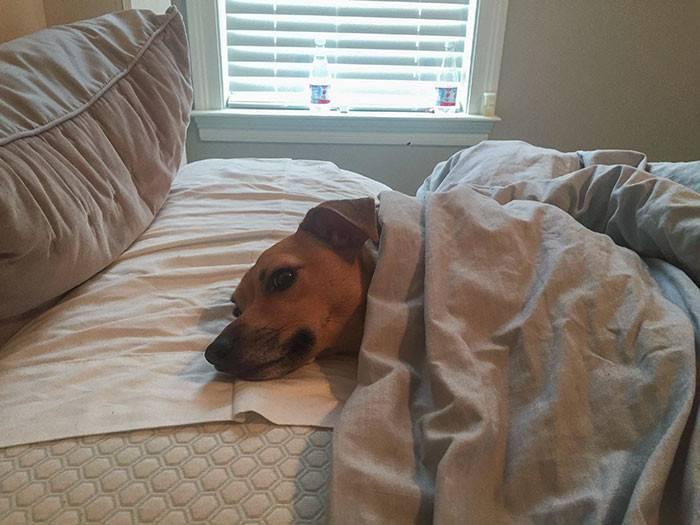 Как отучить собаку грызть мебель: эффективные способы, советы ветеринаров и рекомендации владельцев
