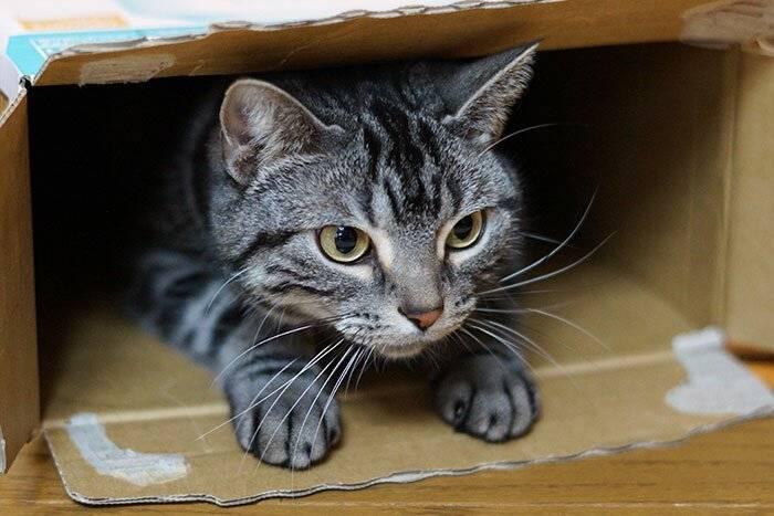 Правда раскрыта: почему кошки так любят лежать в пакетах, коробках и на бумаге