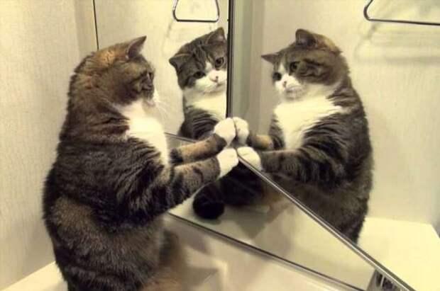 Как сохранить ремонт в квартире, если у домашних животных свое понятие о комфорте