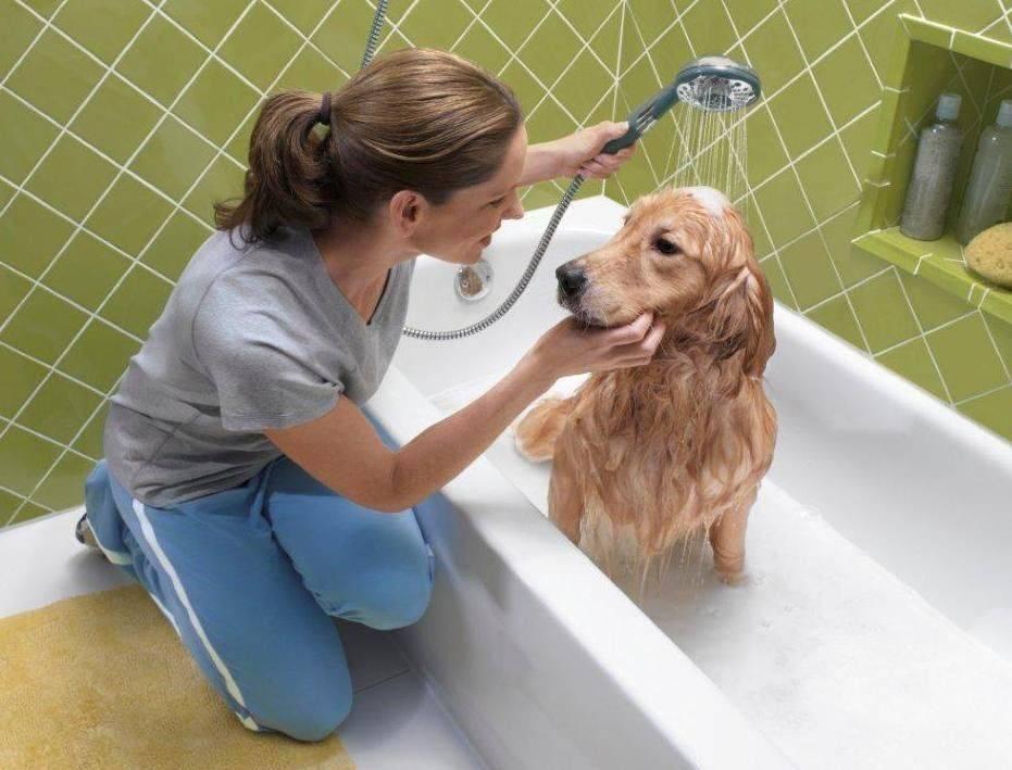 Содержание немецкой овчарки: как правильно ухаживать за собакой, чем кормить питомца и как его дрессировать