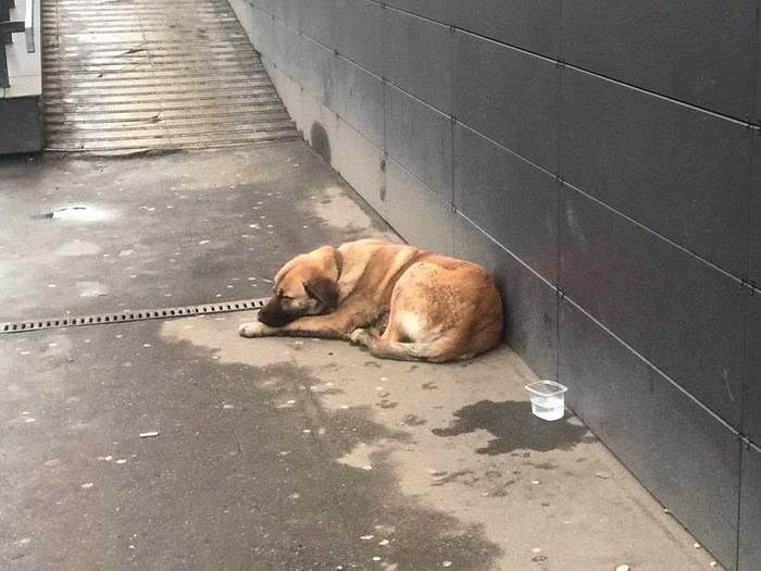 Потерялась собака: техника поиска питомца в разных условиях