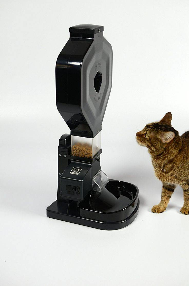Автоматическая кормушка для кошек - с дозатором, электронная, с таймером, особенности, лучшие модели