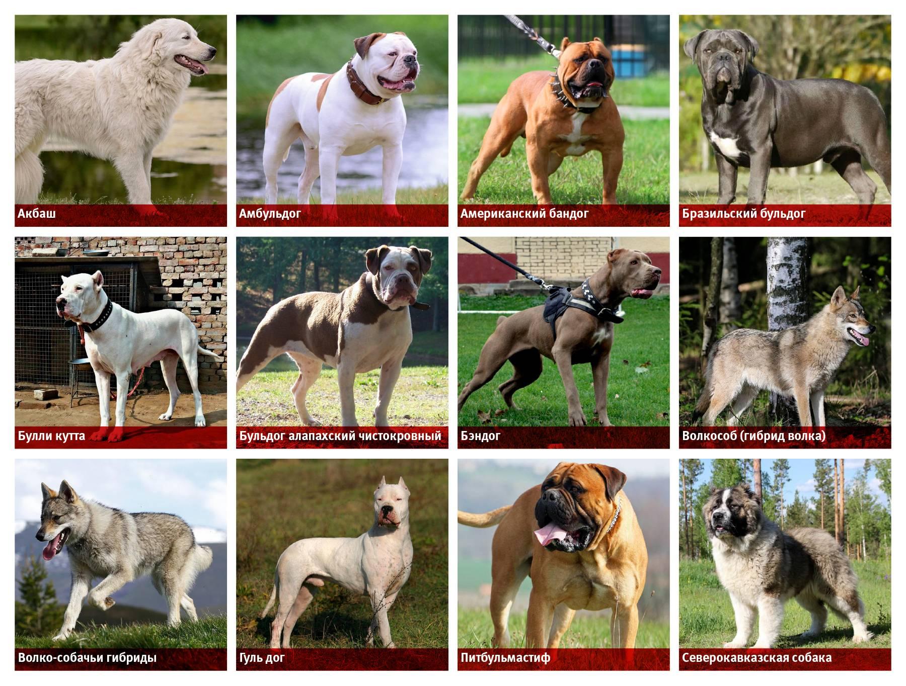 Официальный перечень потенциально опасных и запрещенных пород собак в россии
