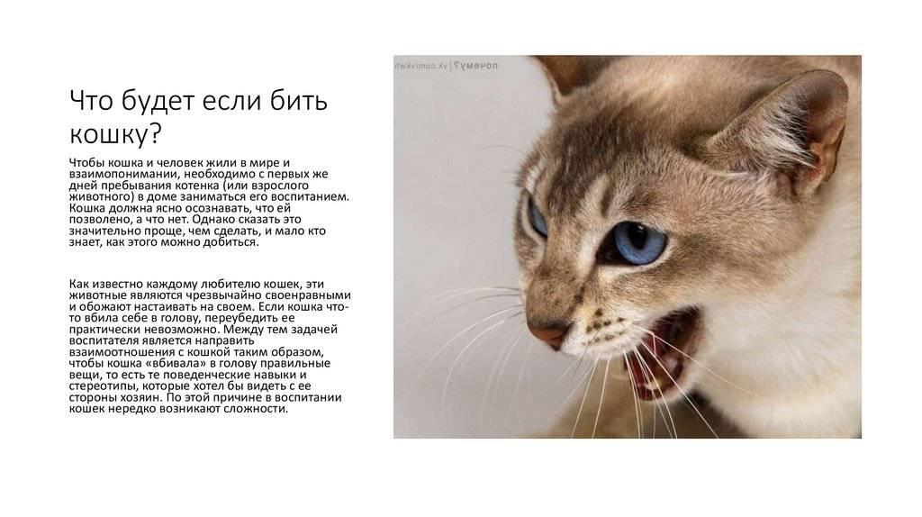 Почему нельзя целовать кошек в морду. правила безопасного общения. почему целовать кошек нельзя - строение тела