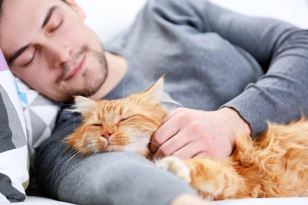 10 признаков того, что ваша котейка счастлива! - народные новости воронежа