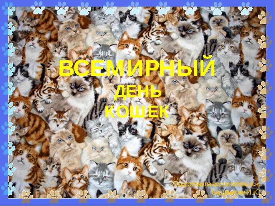 День кошек в россии и международный день кастрации животных — 2017: как отмечают | новости