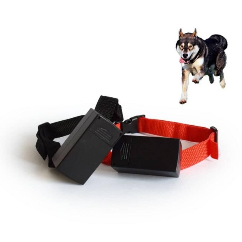Кликер-дрессировка собак шаг за шагом. кликер-тренинг для начинающих - dogtricks.ru