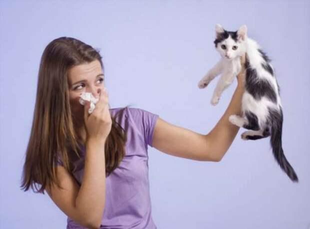6 полезных интерьерных советов для владельцев домашних животных