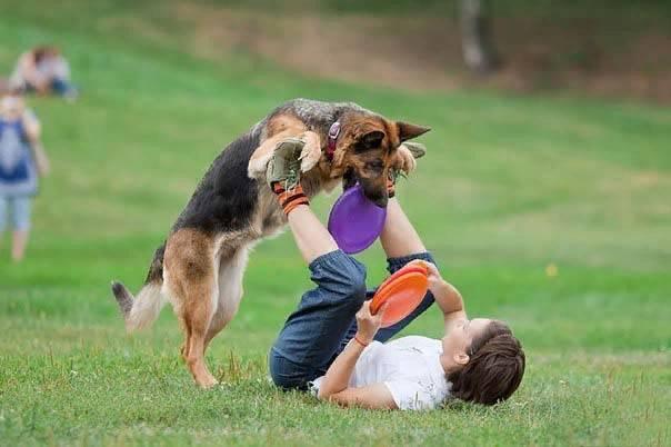 Как быстро отучить собаку прыгать на хозяина