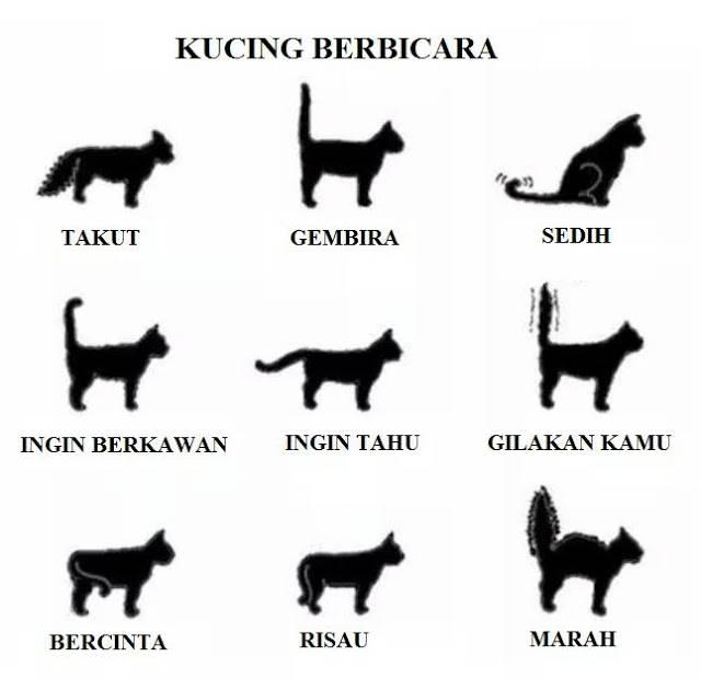 Почему кошки виляют хвостом? определение эмоций животного по движениям